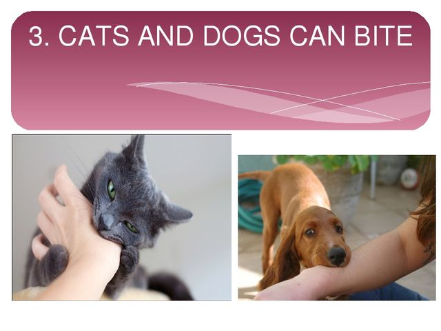 3. CATS AND DOGS CAN BITE