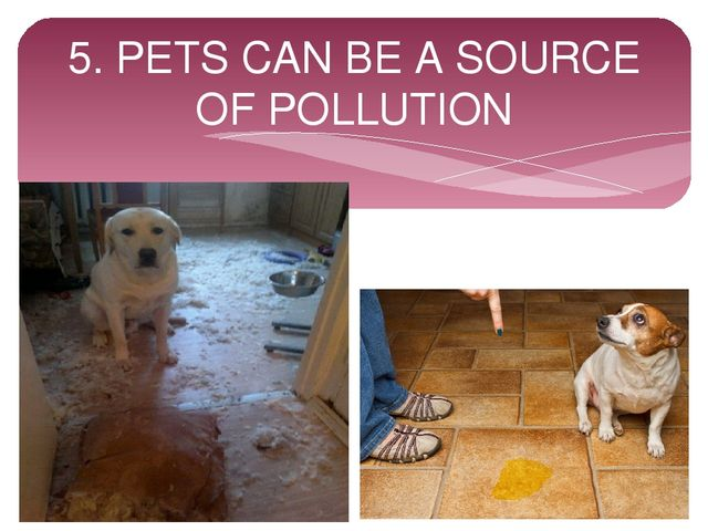 5. PETS CAN BE A SOURCE OF POLLUTION
