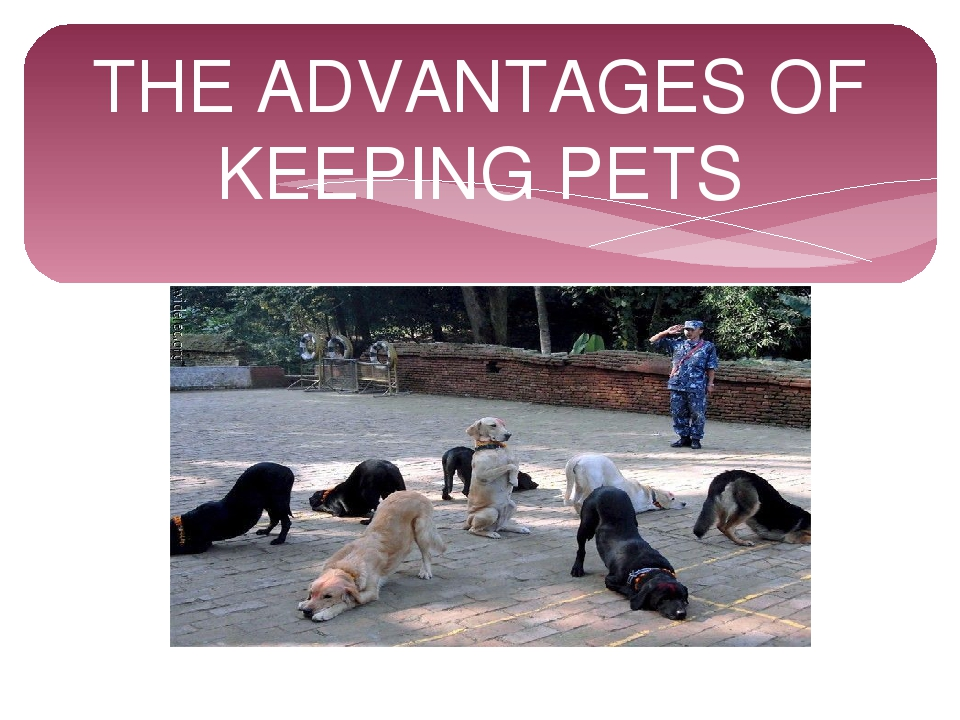 THE ADVANTAGES OF KEEPING PETS