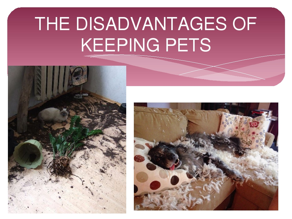 THE DISADVANTAGES OF KEEPING PETS