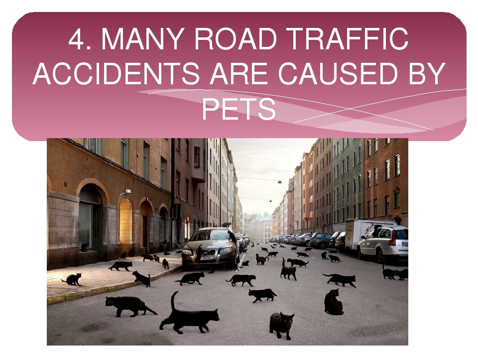 4. MANY ROAD TRAFFIC ACCIDENTS ARE CAUSED BY PETS