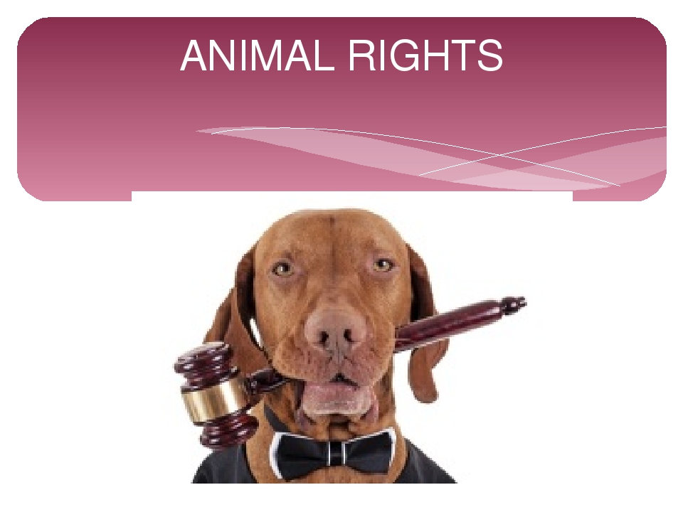animals right Animal rights pln the right to humane treatment claimed on behalf of animals, especially the right to be treated as persons or more like persons under the law animal rights pl n (government, politics & diplomacy) a the rights of animals to be protected from exploitation and abuse by humans b (as modifier): the animal-rights lobby an′imal rights.