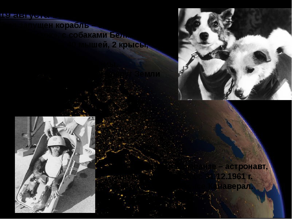 19 августа 1960 г. был запущен корабль – спутник типа «Восток», с собаками Бе...