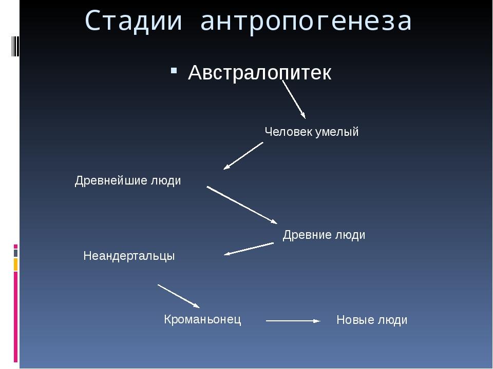 Австралопитек Стадии антропогенеза Человек умелый Древнейшие люди Древние люд...