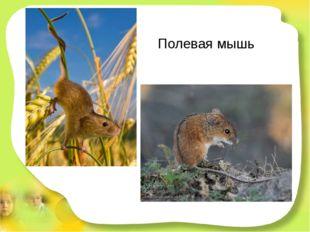 Полевая мышь Я живу в большой степи. Здесь привольно, пи-пи-пи! А приятель мо
