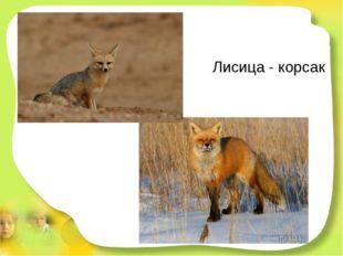 Лисица - корсак Эта рыжая плутовка ловит мышек в поле ловко. Хоть похожа на с