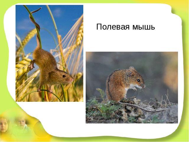 Полевая мышь Я живу в большой степи. Здесь привольно, пи-пи-пи! А приятель мо...