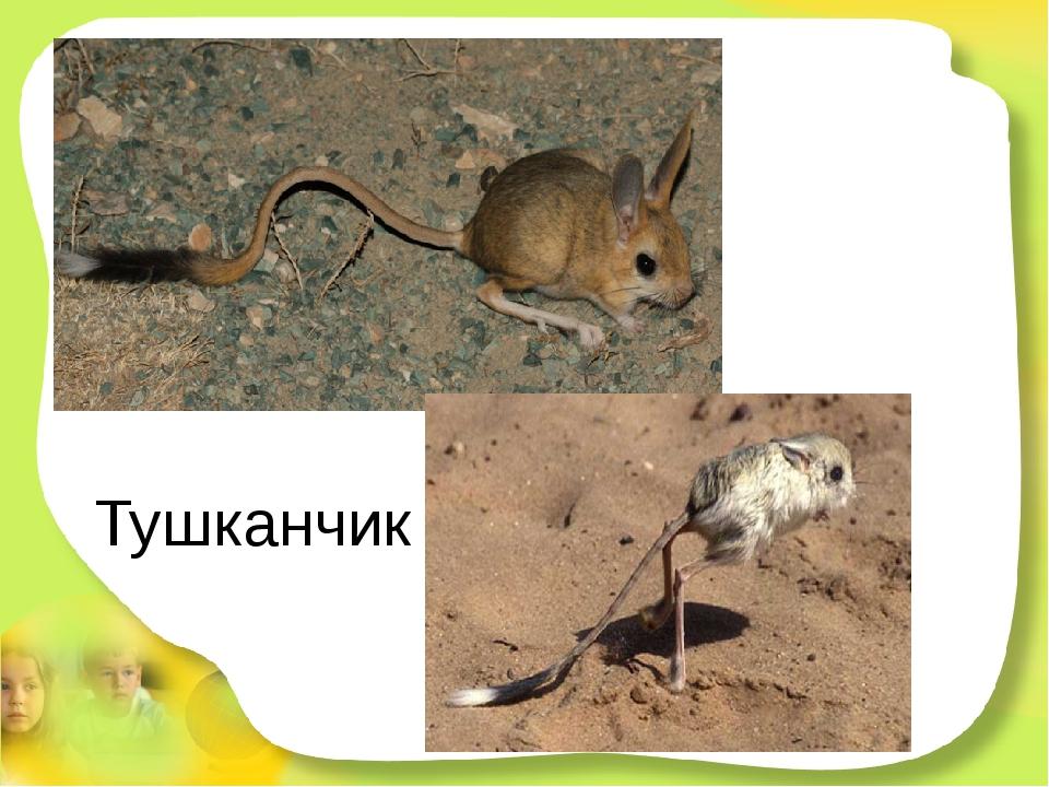 Тушканчик В норке переждав жару, ночью, точно кенгуру, На двух лапках резво с...