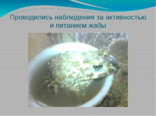 Проводились наблюдения за активностью и питанием жабы
