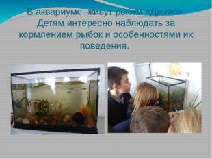 В аквариуме живут рыбки «Данио». Детям интересно наблюдать за кормлением рыбо