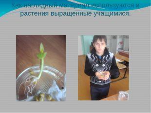 Как наглядный материал используются и растения выращенные учащимися.