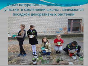 Юные натуралисты принимают активное участие в озеленении школы , занимаются п