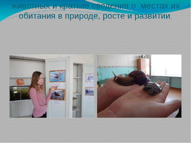 На створках ниш размещены фотографии животных и краткие сведения о местах их...