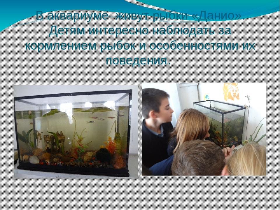 В аквариуме живут рыбки «Данио». Детям интересно наблюдать за кормлением рыбо...