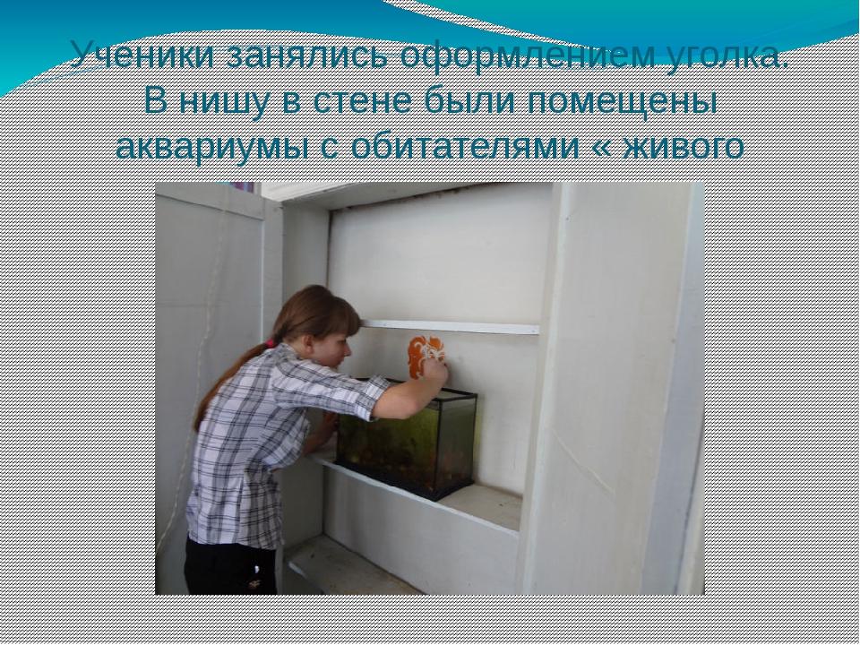 Ученики занялись оформлением уголка. В нишу в стене были помещены аквариумы с...