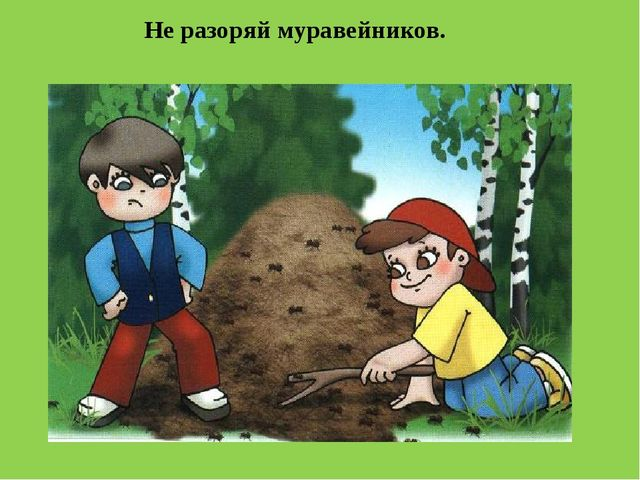 Не разоряй муравейников.