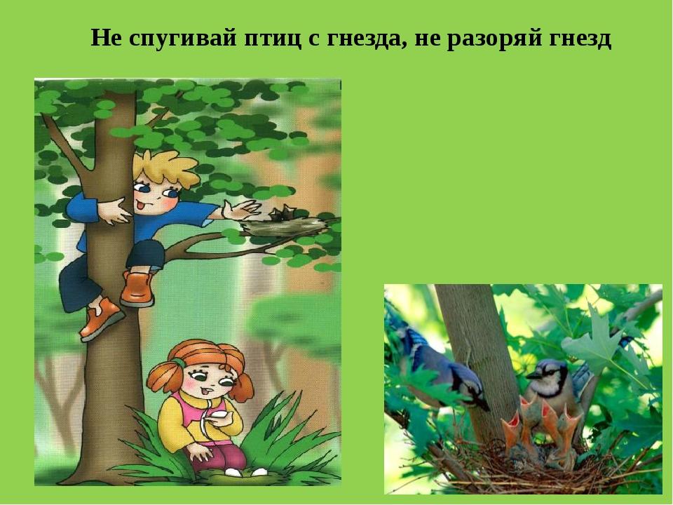 Не спугивай птиц с гнезда, не разоряй гнезд