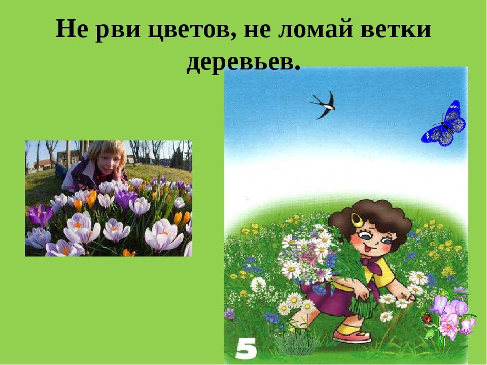 Не рви цветов, не ломай ветки деревьев.