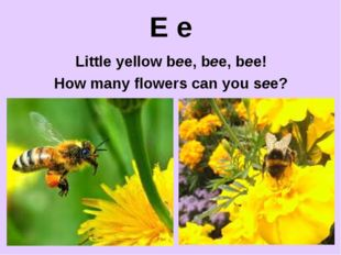 E e Little yellow bee, bee, bee! How many flowers can you see?