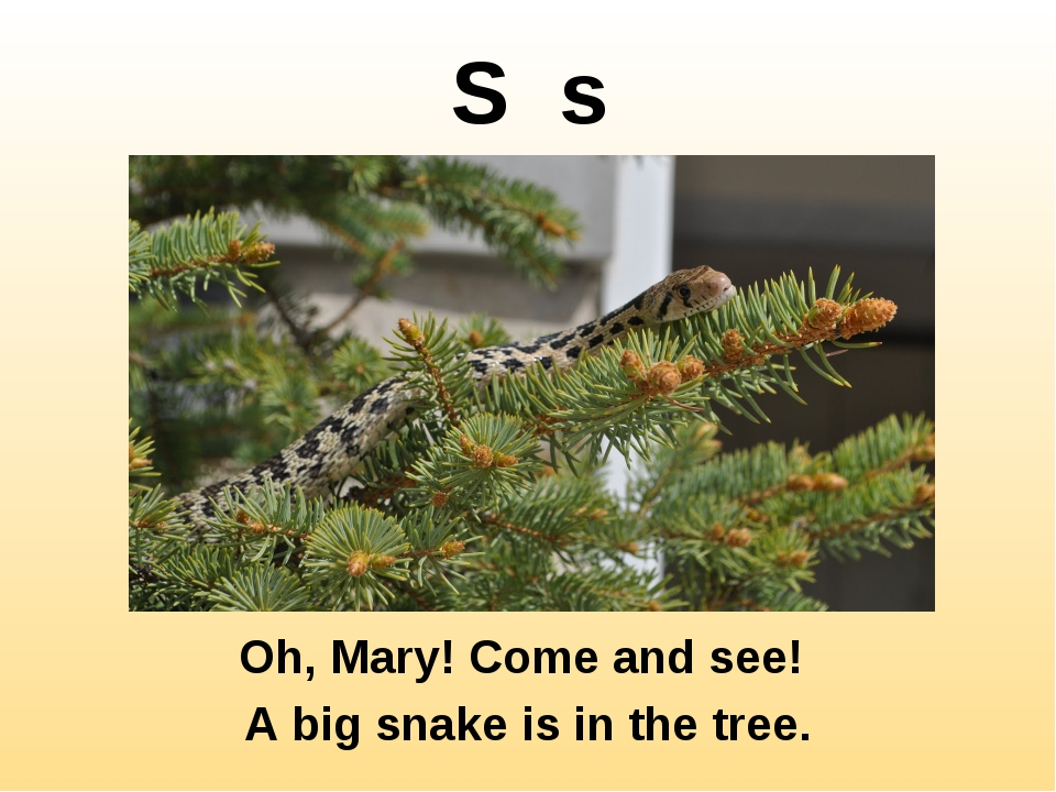 S s Oh, Mary! Come and see! A big snake is in the tree.