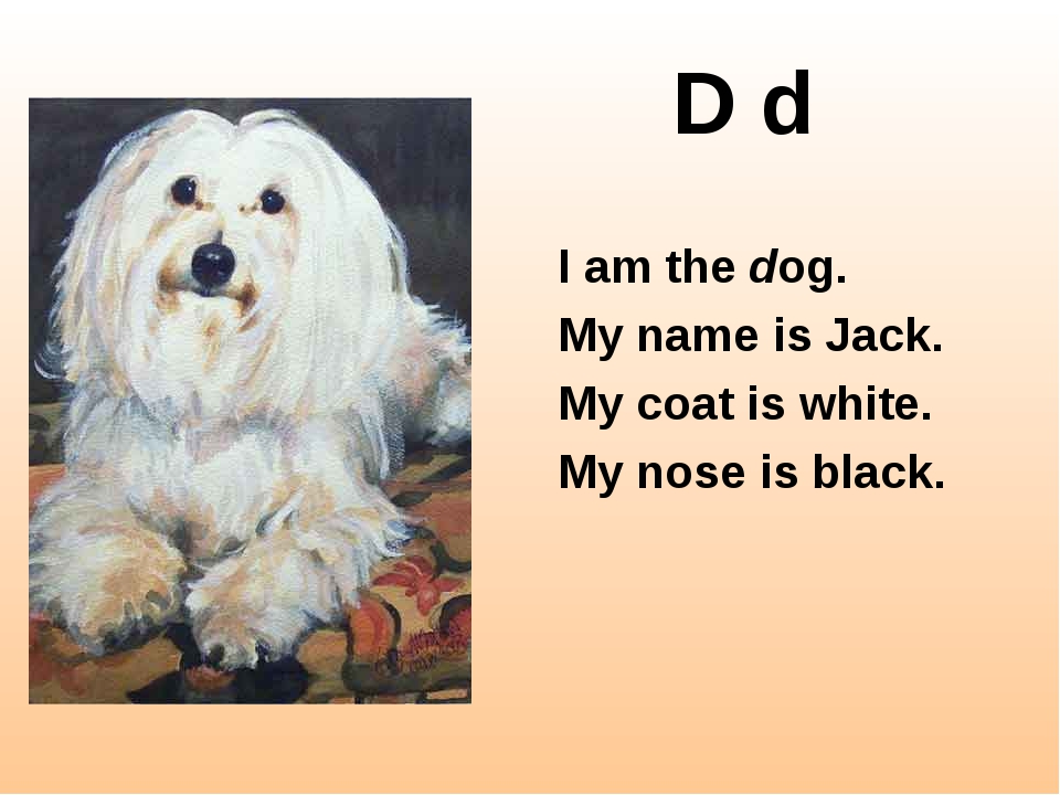 D d I am the dog. My name is Jack. My coat is white. My nose is black.