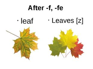 After -f, -fe leaf Leaves [z]