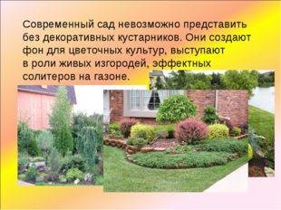 Современный сад невозможно представить без декоративных кустарников. Они созд