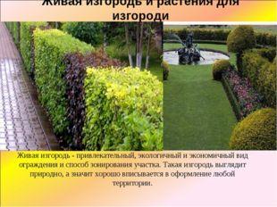 Живая изгородь и растения для изгороди Живая изгородь - привлекательный, экол