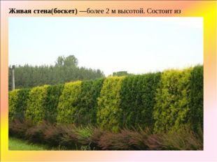 Живая стена(боскет)—более 2 м высотой. Состоит из сильных деревьев с густыми