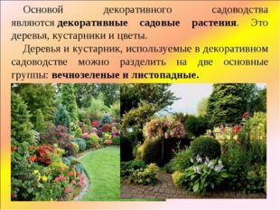 Основой декоративного садоводства являютсядекоративные садовые растения. Это