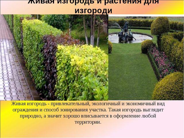 Живая изгородь и растения для изгороди Живая изгородь - привлекательный, экол...