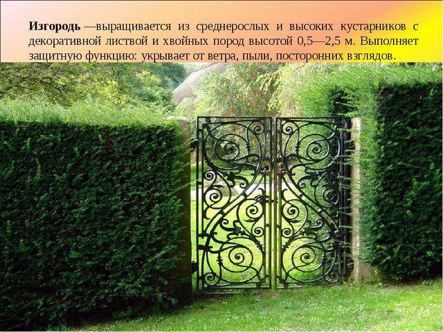 Изгородь—выращивается из среднерослых и высоких кустарников с декоративной л...