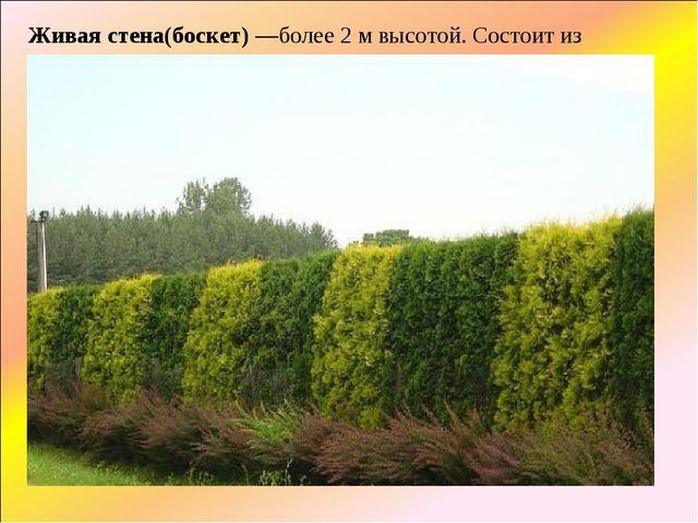 Живая стена(боскет)—более 2 м высотой. Состоит из сильных деревьев с густыми...