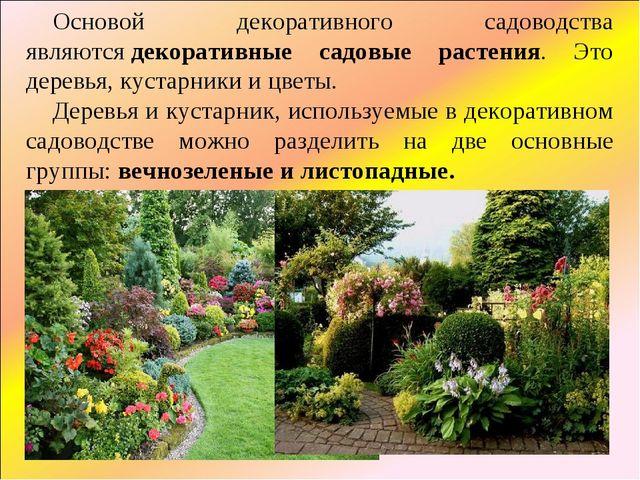 Основой декоративного садоводства являютсядекоративные садовые растения. Это...