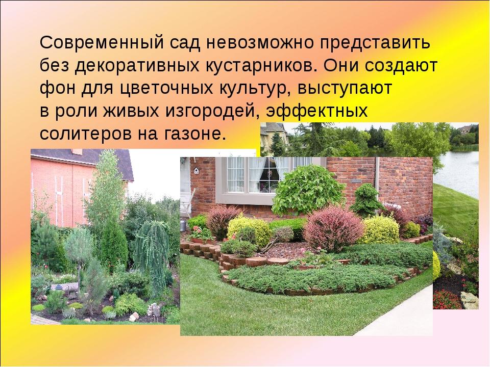 Современный сад невозможно представить без декоративных кустарников. Они созд...