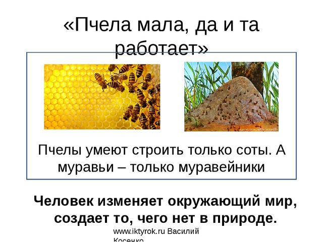 «Пчела мала, да и та работает» Пчелы умеют строить только соты. А муравьи – т...