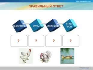 www.themegallery.com Company Logo ПРАВИЛЬНЫЙ ОТВЕТ: ЦЫПЛЯТА КУРЫ ИНДЕЙКИ УТКИ