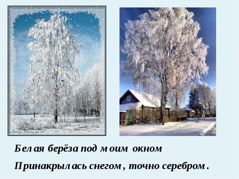 Белая берёза под моим окном Принакрылась снегом, точно серебром.