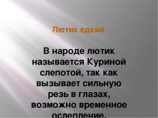 Лютик едкий В народе лютик называется Куриной слепотой, так как вызывает силь