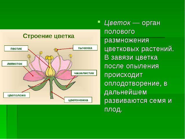 Цветок — орган полового размножения цветковых растений. В завязи цветка после...