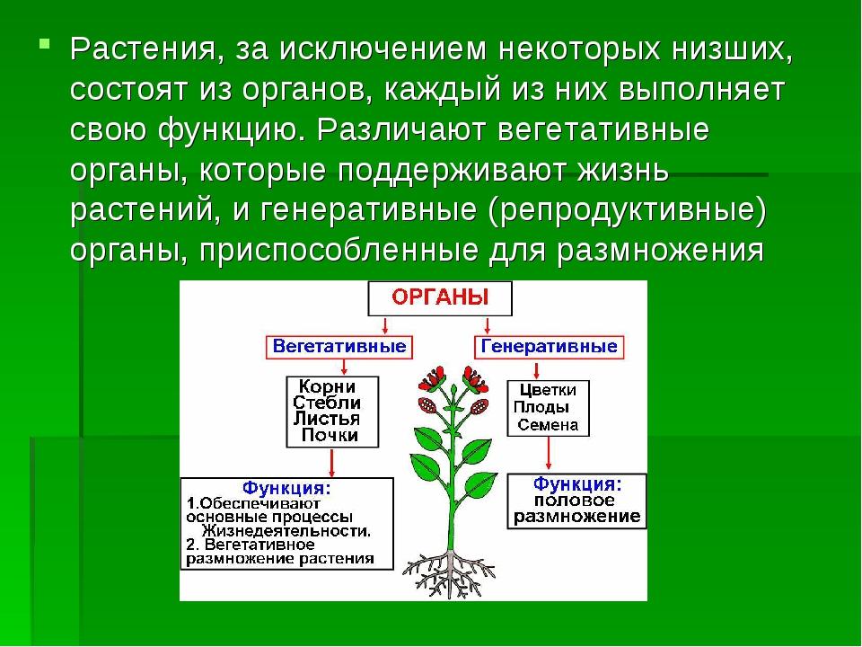 Растения, за исключением некоторых низших, состоят из органов, каждый из них...