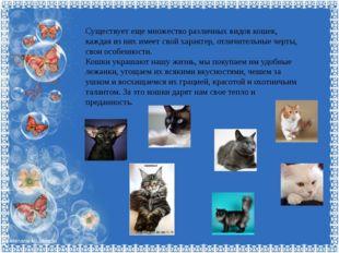 Существует еще множество различных видов кошек, каждая из них имеет свой хара