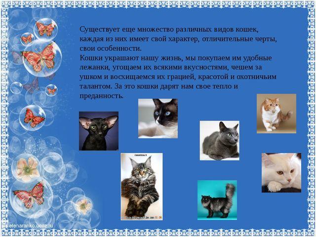 Существует еще множество различных видов кошек, каждая из них имеет свой хара...