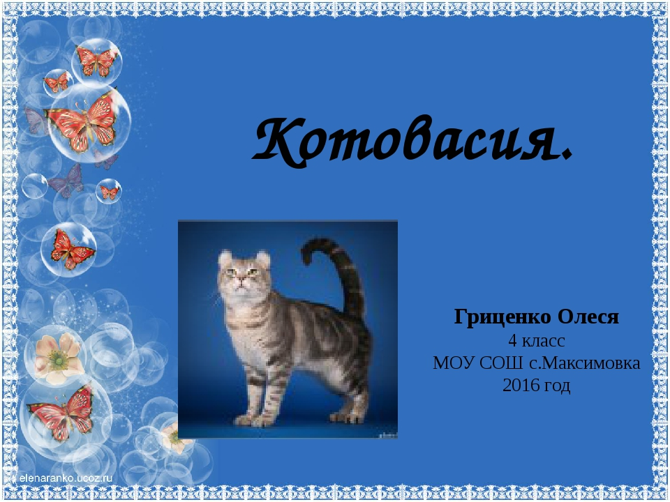 Котовасия. Гриценко Олеся 4 класс МОУ СОШ с.Максимовка 2016 год