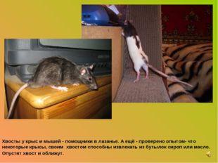 Хвосты у крыс и мышей - помощники в лазанье. А ещё - проверено опытом- что не