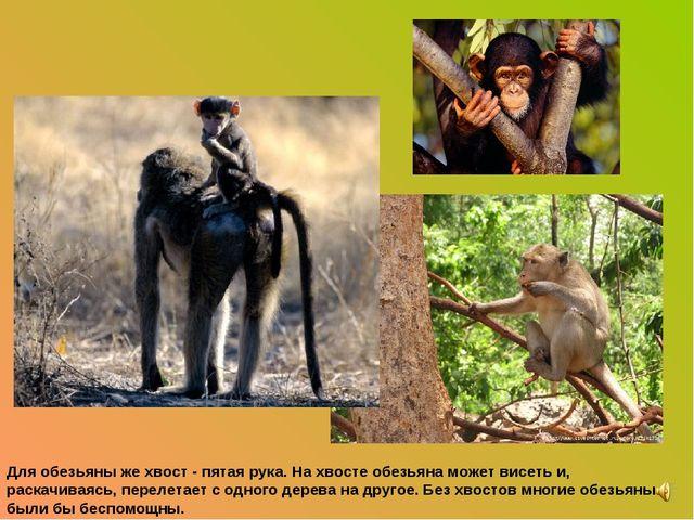 Для обезьяны же хвост - пятая рука. На хвосте обезьяна может висеть и, раскач...