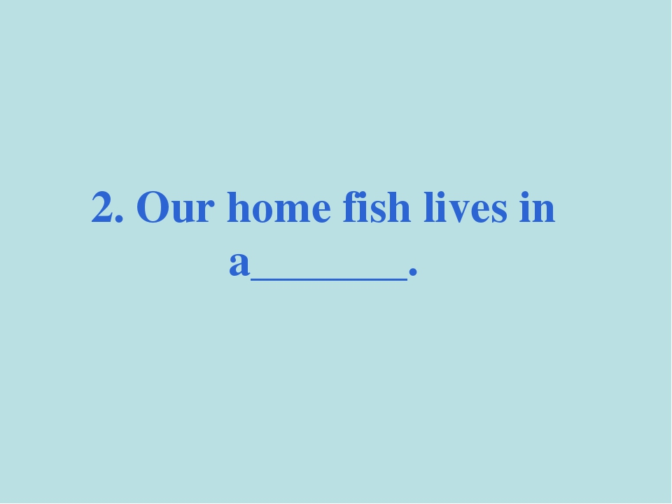 2. Our home fish lives in a_______.