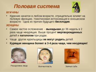Половая система МУЖЧИНЫ Курение начатое в любом возрасте, отрицательно влияет