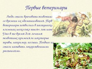 Первые ветеринары Люди стали врачевать животных со времени их одомашнивания.