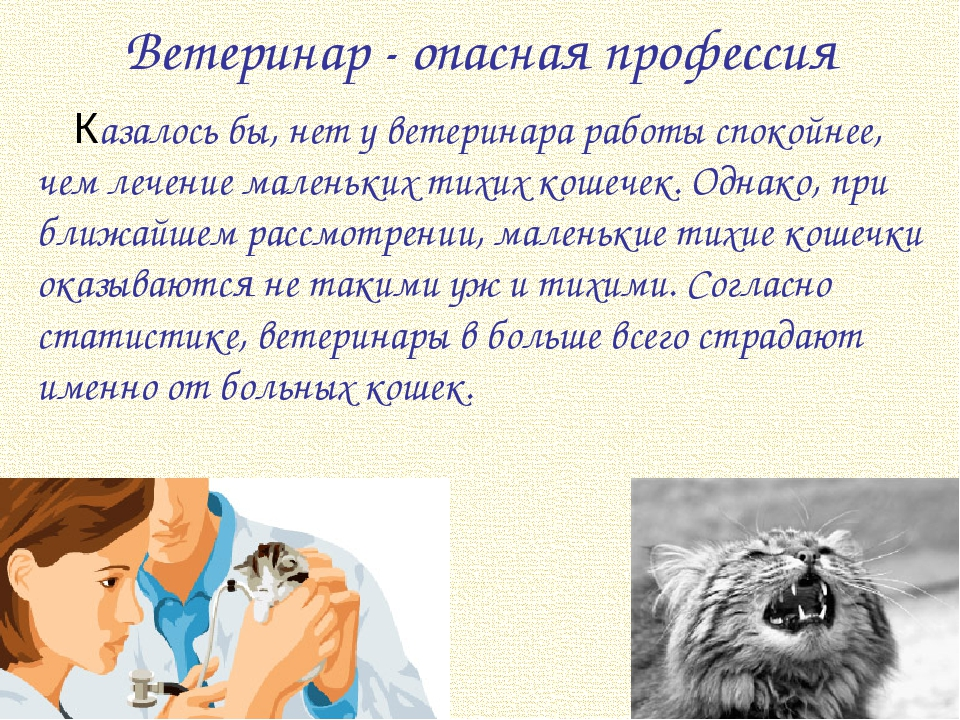 Ветеринар - опасная профессия Казалось бы, нет у ветеринара работы спокойнее,...